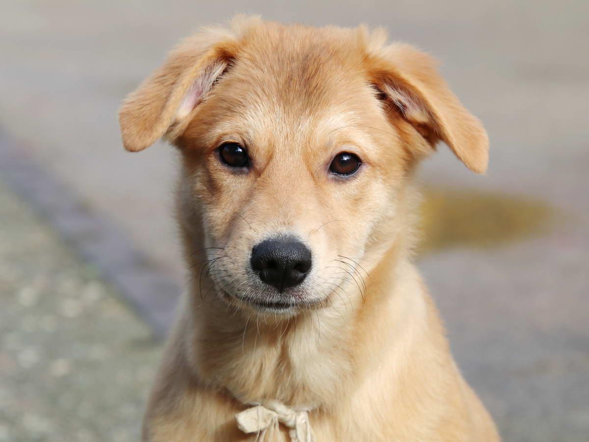 2064 Lexy Hundemädchen